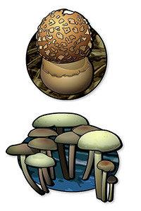 mushrooms_thumb